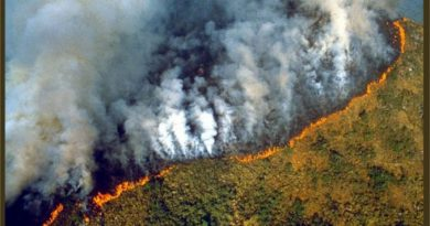 """Brasil: El """"desarrollo"""" capitalista destruye e incendia el Amazonas"""