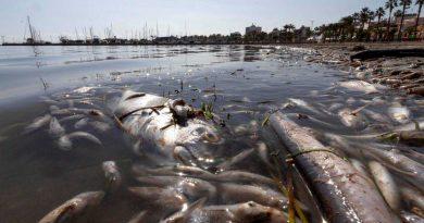 Mar Menor: un ecocidio anunciado y provocado.